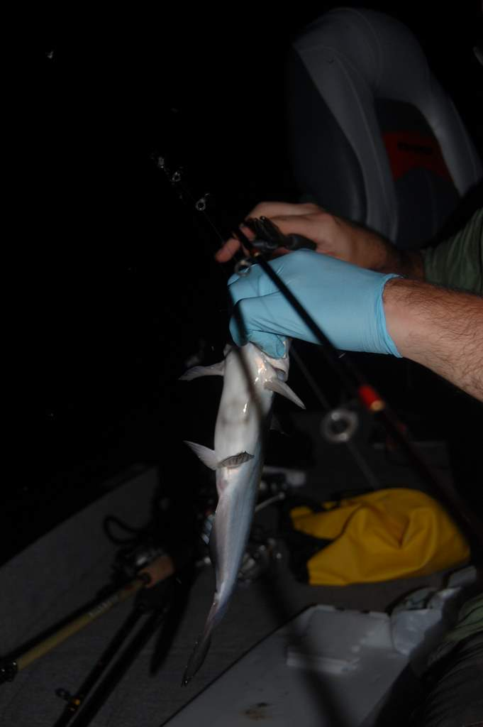 Catfishing 006