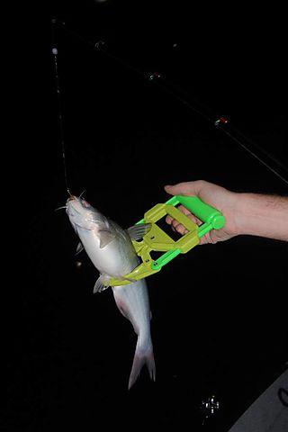 Catfishing 007