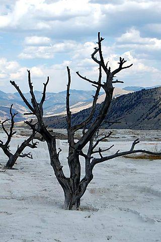 Yellowstone day 3 320