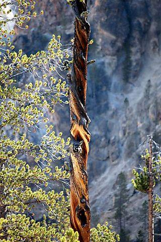 Yellowstone day 3 064