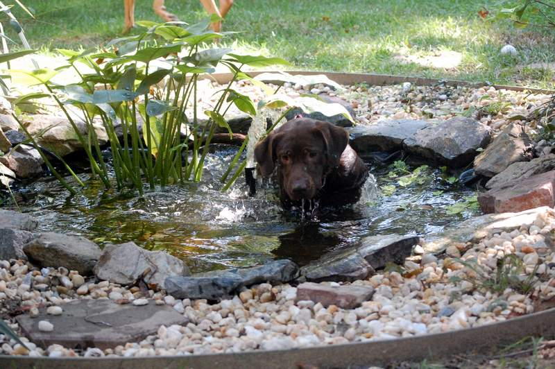 Doggies 10-04-08 043