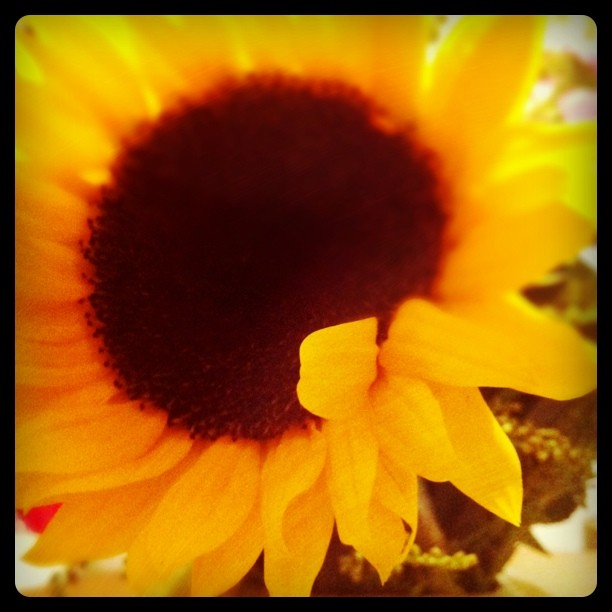 Easter sunflower