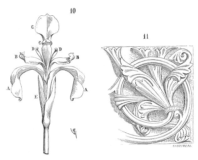 Fleur.iris.2 dictionary diagram