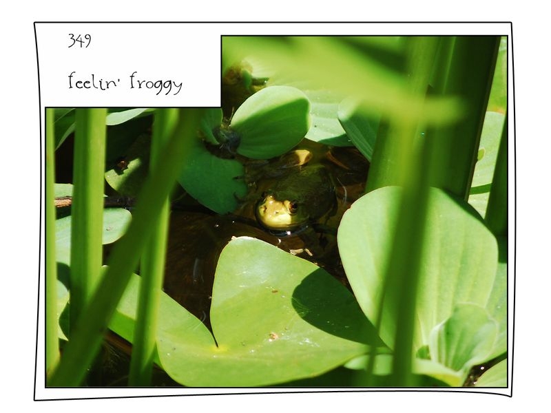 34p feelin froggy