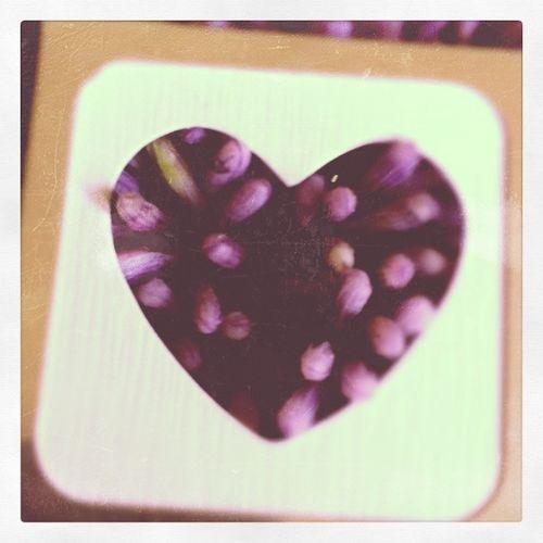 Heart flower love