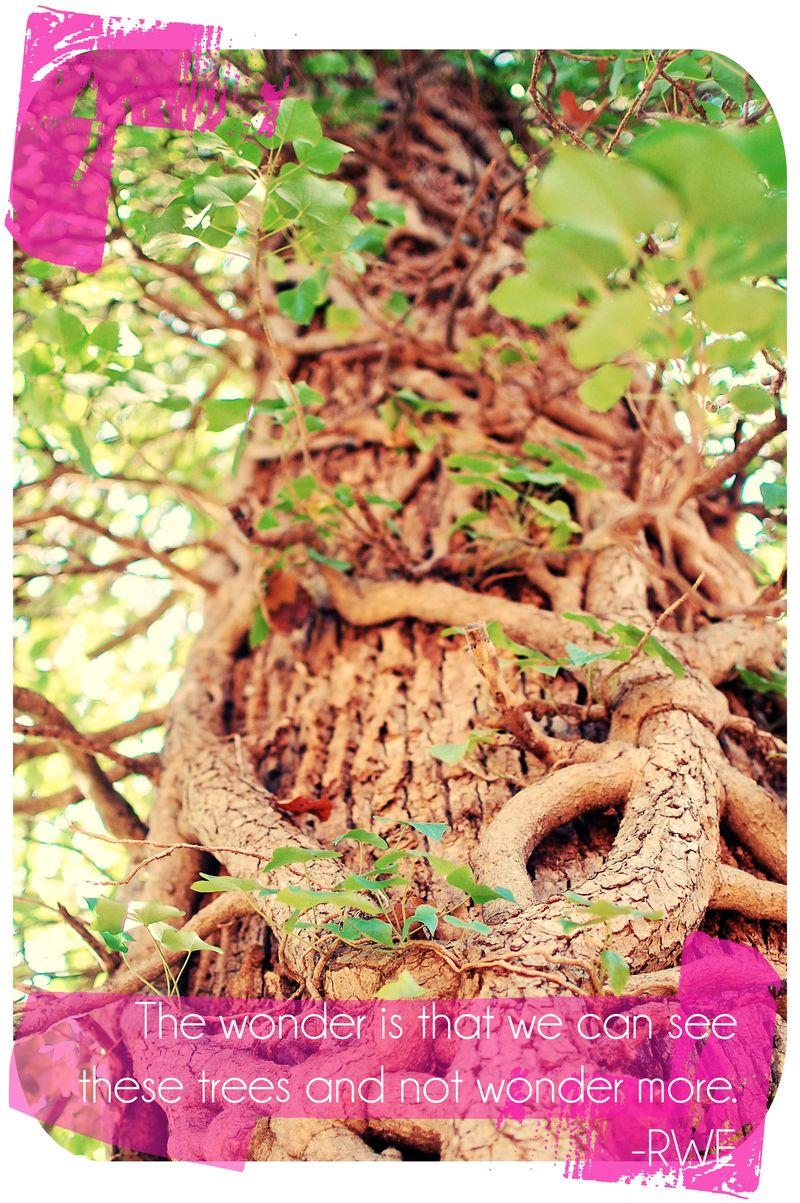 Monticcello tree copy copy