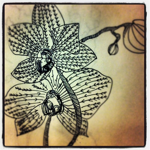 Orchids in sharpie